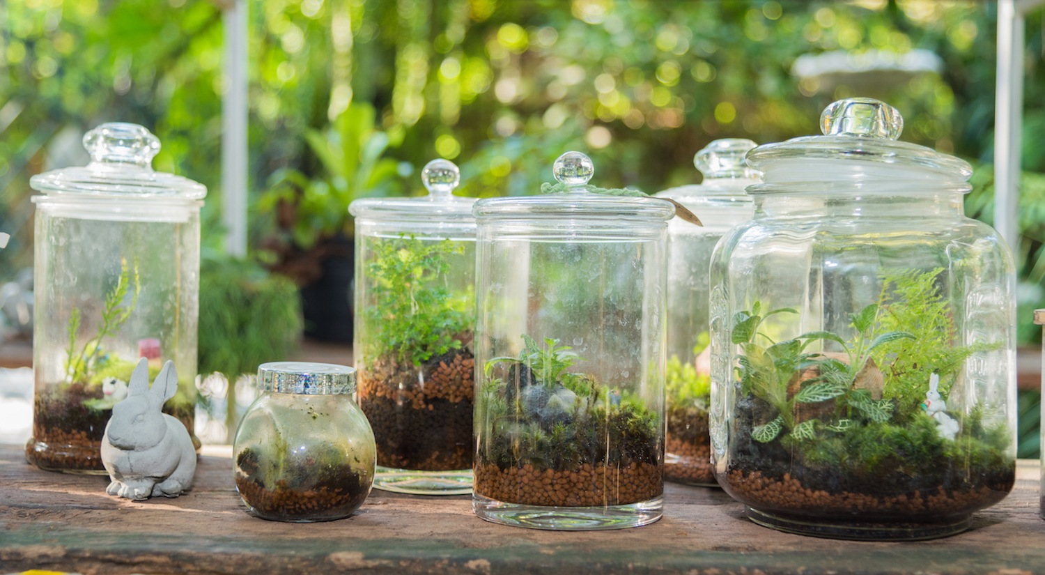 Diy Your Own Terrarium For Easy Low Maintenance Decor
